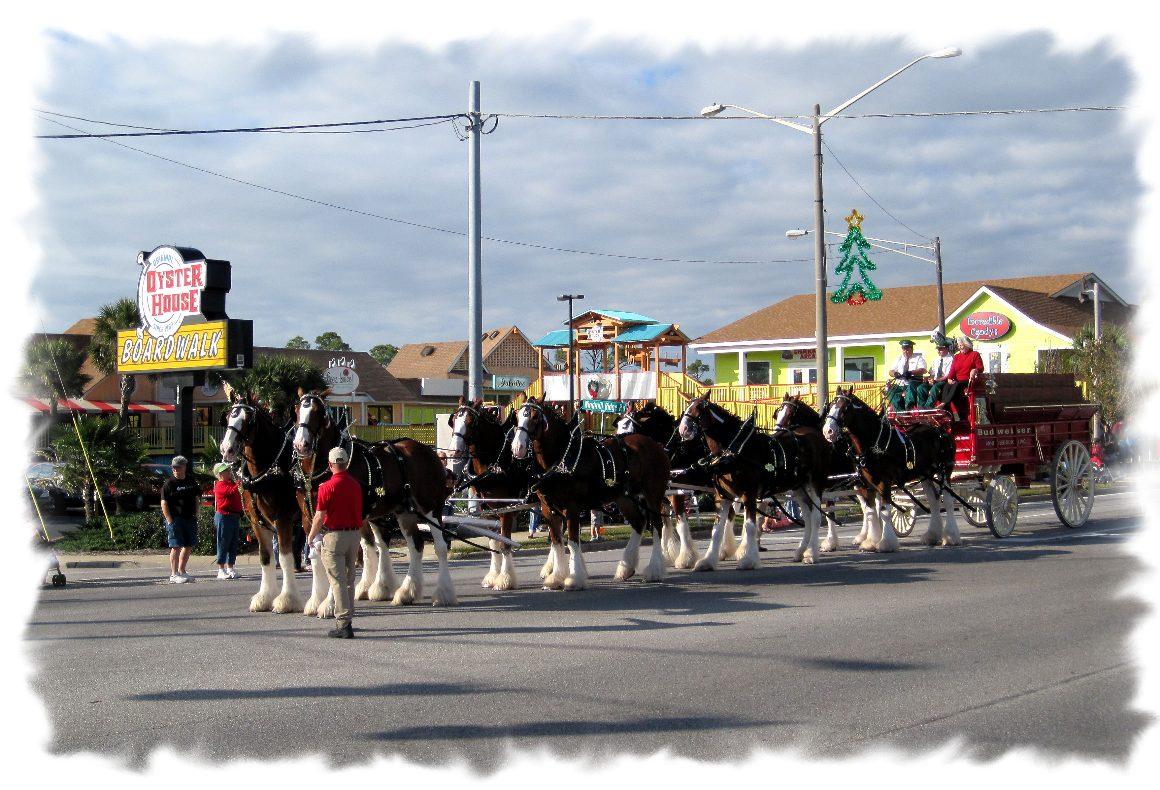 christmas parade horses