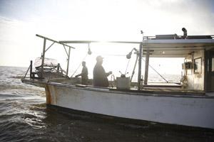 fishermen catch oysters