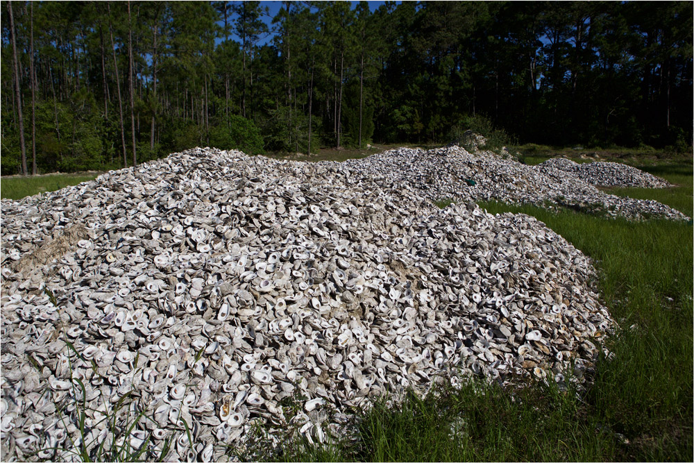 9.4 million oyster shells recovered from Gulf Coast restaurants